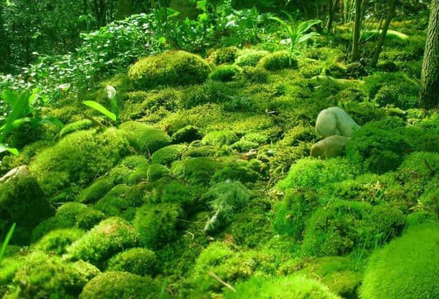 圣地生物苔蘚發黃什么原因-山東可信賴的安艷蘭花營養液生產基地