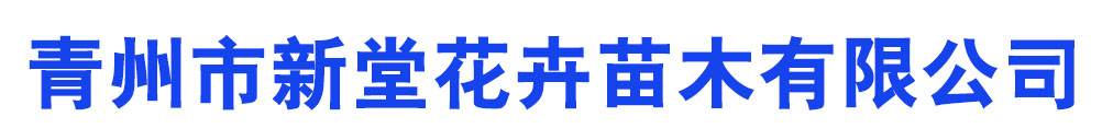 青州市新堂花卉苗木有限公司