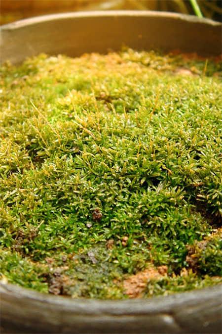 苔蘚發黃|來安艷科技,買實惠的熱帶植物苔蘚液
