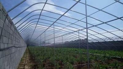 日光蔬菜大棚承建-江西阳光板温室大棚公司