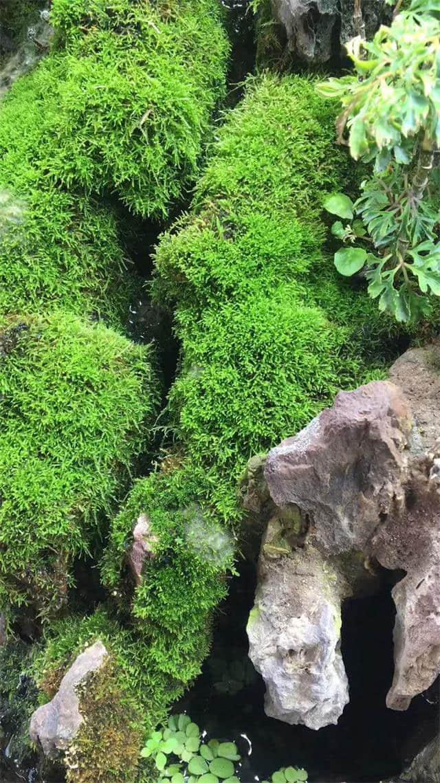 热带植物菌剂苔藓液肥-划算的安艳苔藓液肥莱芜哪里有