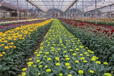花卉大棚价格-广东花卉温室公司-山东花卉温室承建