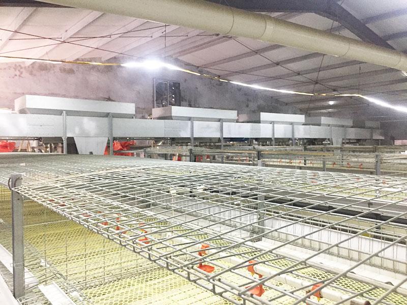 常州肉鴨養殖設備-金華肉鴨養殖設備價格-溫州肉鴨養殖設備
