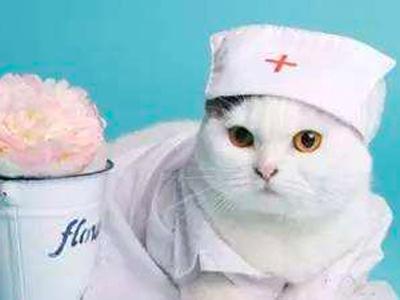 西宁宠物医疗怎么样?西宁宠物医院就找圣伯纳宠物医院