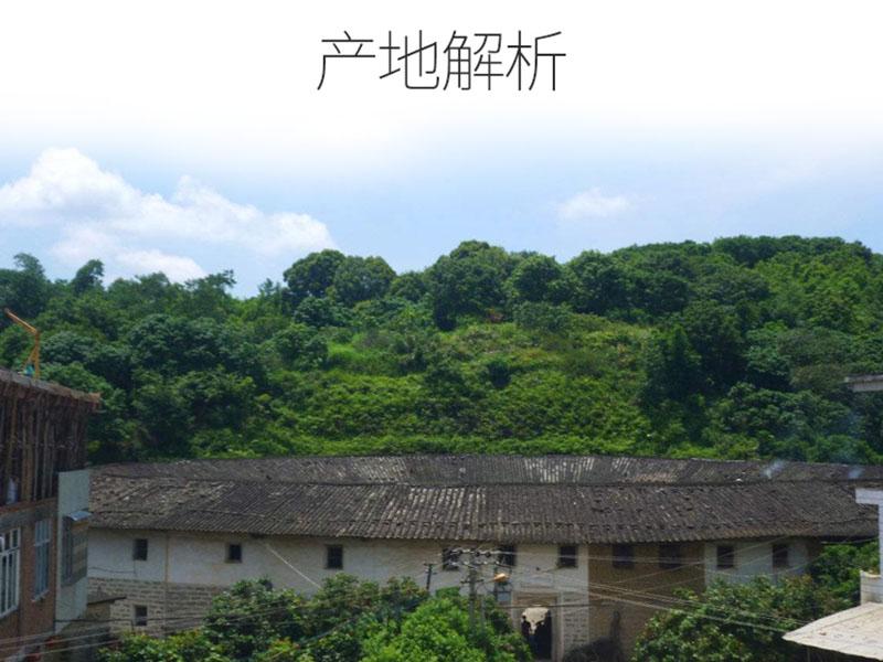 观音串供货商-江苏观音串茶价格-江苏观音串茶批发