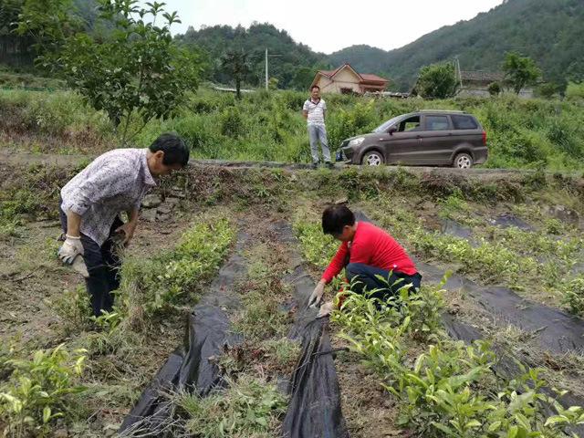 防草布铺设-无棣宏贯塑�xian�pin专业供应防草布