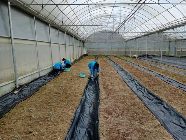 防草布铺设价钱如何-防草布铺设还需要哪些配件-防草布铺设视频