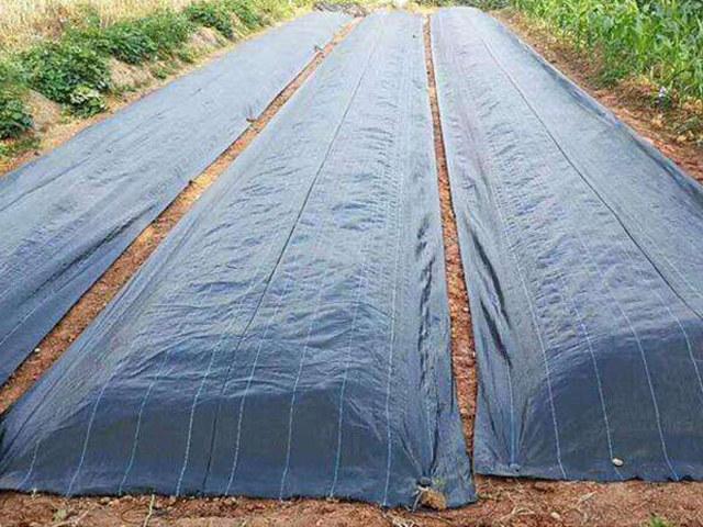 曲靖防草布-可降解的防草布-品德良好的防草布