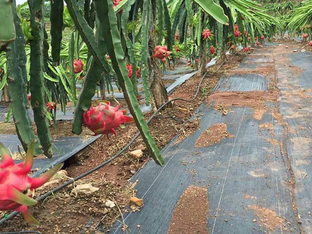 防草布园艺使用|滨州口碑好的防草布商家推荐