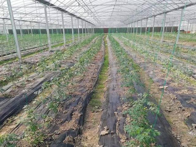 防水防草布-使用期长的防草布多少钱-供应防草布多少钱