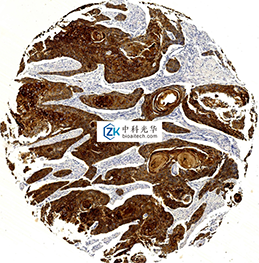 西安免疫组化修复-天津免疫组化技术(IHC)-天津免疫组化