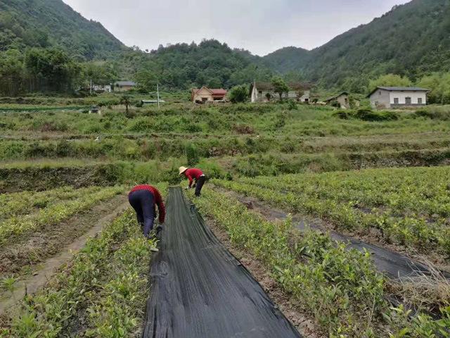 苗圃除草布-芦笋除草地布-生产除草布生产机械