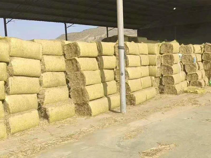 甘肃牧草|甘肃苜蓿草|定西牧草厂家|甘肃燕麦草销售
