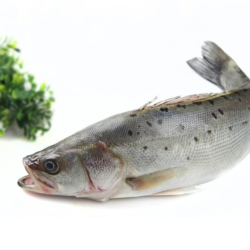 松江鲈鱼供应-福建口碑好的鲈鱼生产基地
