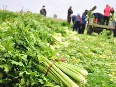 法库果蔬配送-苏家屯配送蔬菜-铁西配送蔬菜