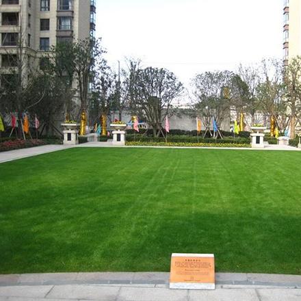 吉林草坪种植售后有保障