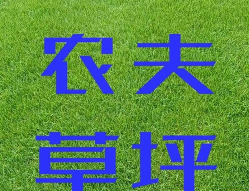 長春草坪-供銷吉林草坪價位-促銷吉林草坪價位