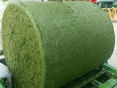甘肃紫花苜蓿-定西苜蓿草粉-甘肃苜蓿草种植-拉萨牧草销售