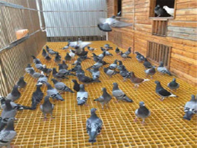 恒澤定制養殖場格柵 玻璃鋼養殖場格柵 鴿舍地網廠家