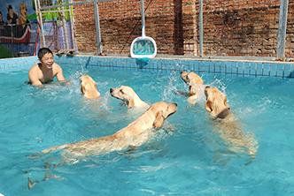 专业的惠州宠物培训哪里有_宠物培训学校价格