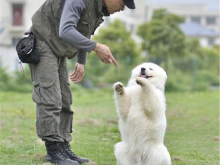 广东具有口碑的犬类托管公司推荐_宠物寄养训练