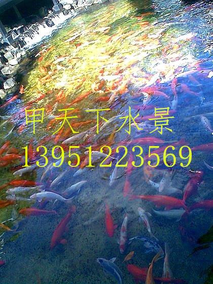 镇江市企业单位锦鲤鱼池过滤系统设计!
