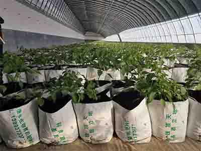 酒泉辣椒育苗价格-平凉蔬菜采摘种植基地-庆阳蔬菜采摘