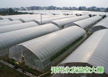 鄭州蔬菜大棚-大型蔬菜大棚-生產廠家