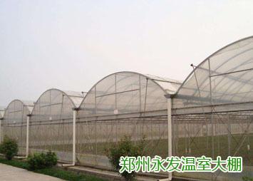 郑州连动温室大棚-想买品质好的温室大棚,就到永发温室大棚
