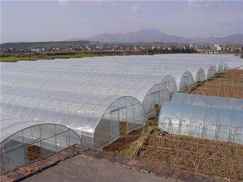 河南智能溫室大棚-簡易溫室大棚搭建廠家
