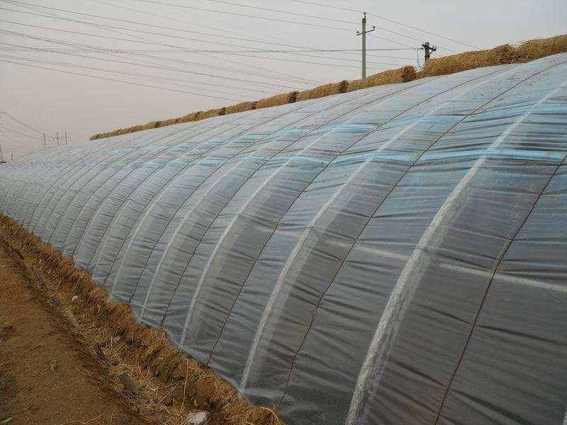 河南蔬菜大棚-周口連棟溫室大棚廠家-駐馬店連棟溫室大棚廠家