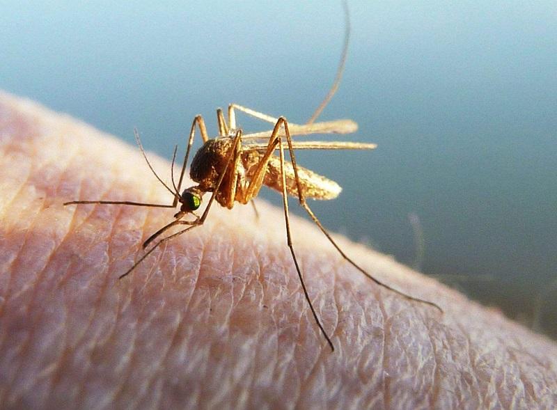 防治白蟻公司電話-除螞蟻公司-滅蟑螂哪家公司好