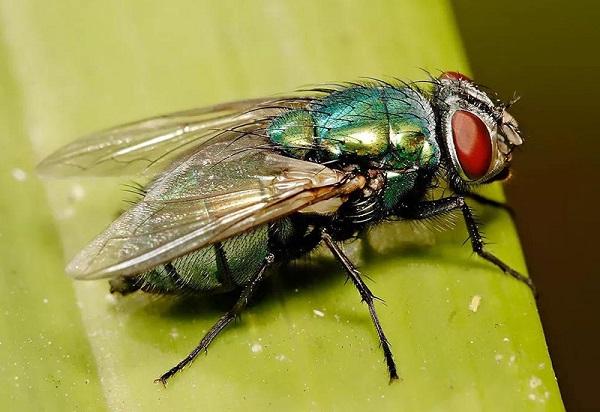 肇庆除虫公司_肇庆哪家蝇类防治公司靠谱