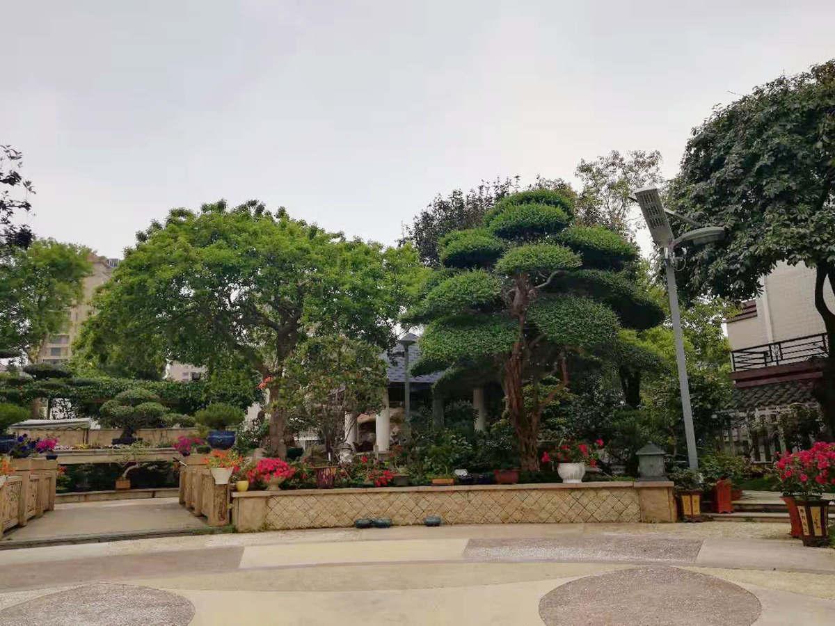 景观照明设计-专业的植物合理布局搭配出自德承园林景观设计