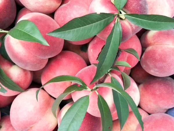 桃可以怎么吃    南陽桃花源采摘園
