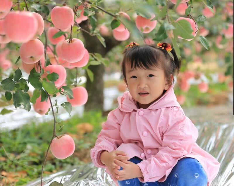 【昆嵛山珍】烟薯25号 烟台蓝莓 烟台苹果礼盒