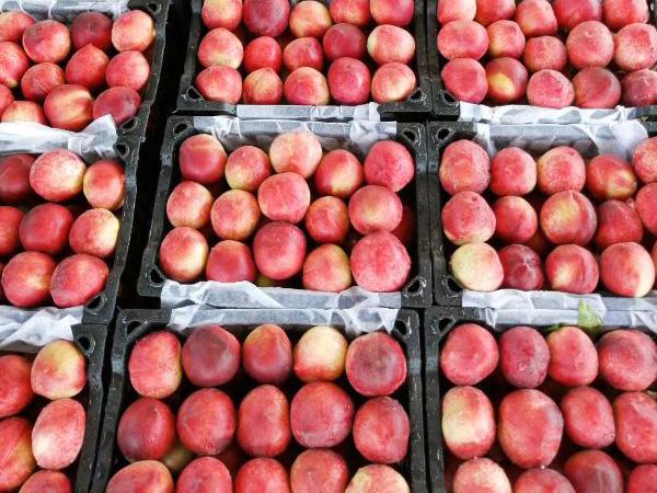 桃子属于什么种类水果?