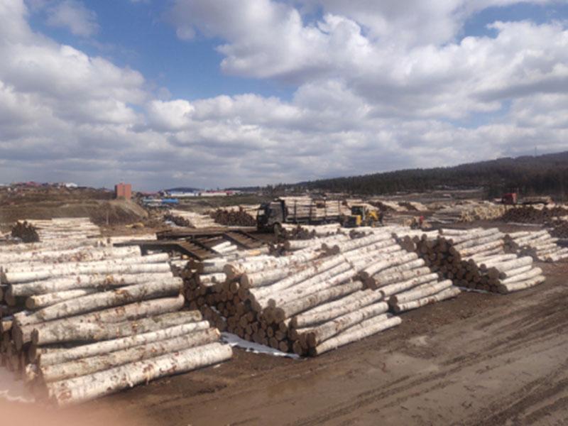 俄羅斯進口原木你值得擁有 濱州楊木廠家