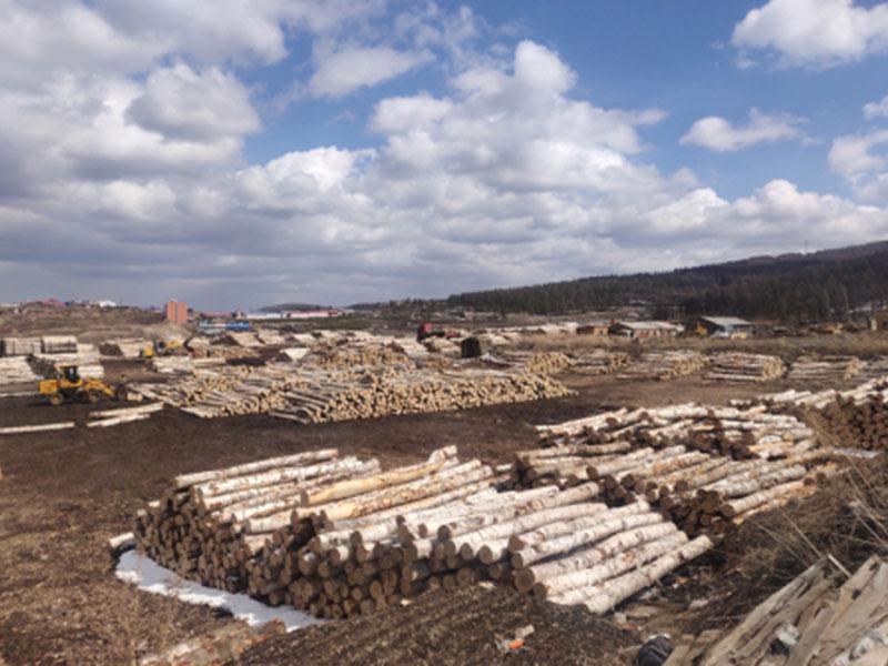 黑龍江物超所值的俄羅斯進口原木 鐵嶺白樺廠家