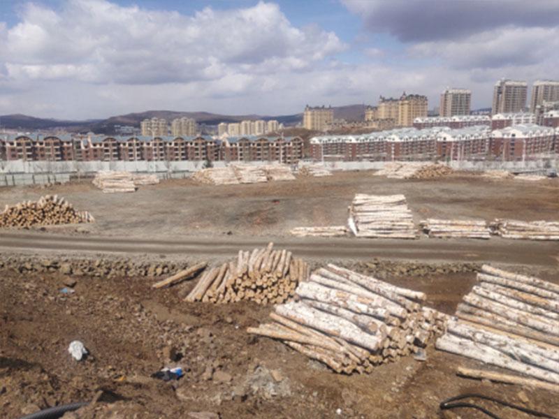 青岛白桦厂家-哪里可以买到耐用的俄罗斯进口原木