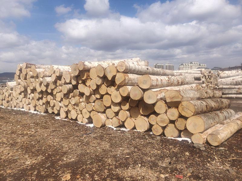濟南松子廠家,買實惠的俄羅斯食品,就來綏芬河凱博木業