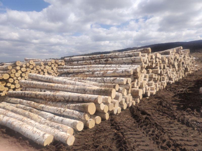 聲譽好的俄羅斯原木進口供應商當屬綏芬河凱博木業_鶴崗楊木廠家