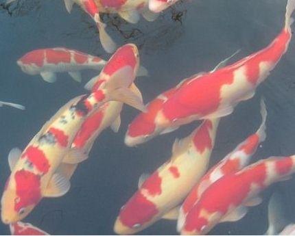 合肥市企业单位景观鱼池水过滤工程!