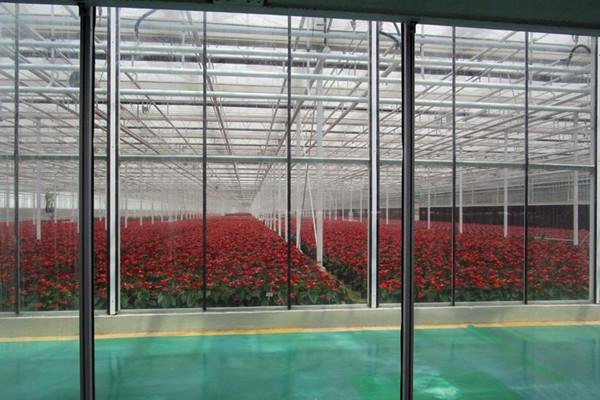 玻璃温室,玻璃温室建设,温室大棚建设