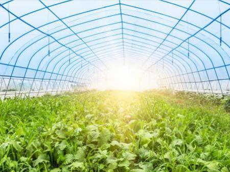 蔬菜温室//蔬菜温室建设
