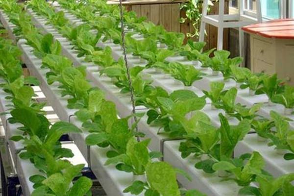 新疆無土栽培造價-北京高架草莓價格-北京高架草莓造價