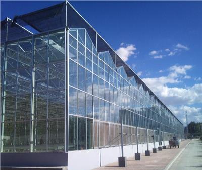 玻璃连栋温室造价,玻璃温室承建,玻璃温室