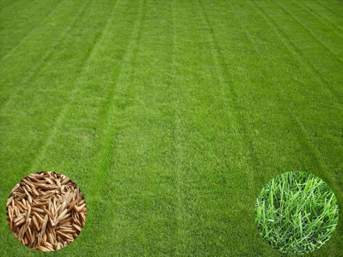 草坪混播护坡混播