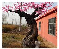 景观工程-泗县仿真花树厂家-菏泽市仿真花树厂家