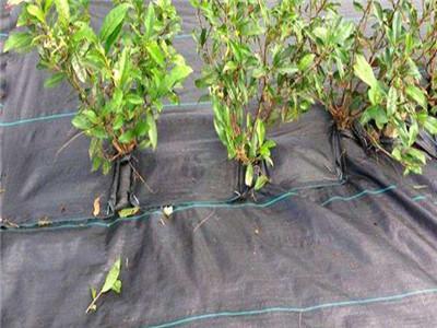 生态防草布报价-果树防草布价格行情-果树防草布价格